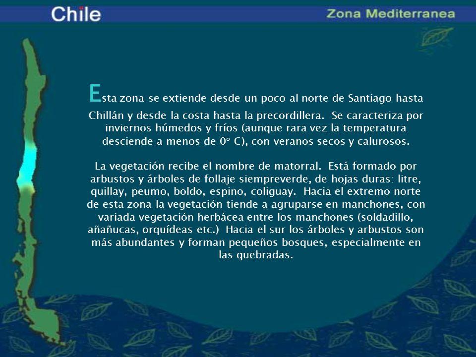 Esta zona se extiende desde un poco al norte de Santiago hasta Chillán y desde la costa hasta la precordillera. Se caracteriza por inviernos húmedos y fríos (aunque rara vez la temperatura desciende a menos de 0° C), con veranos secos y calurosos.