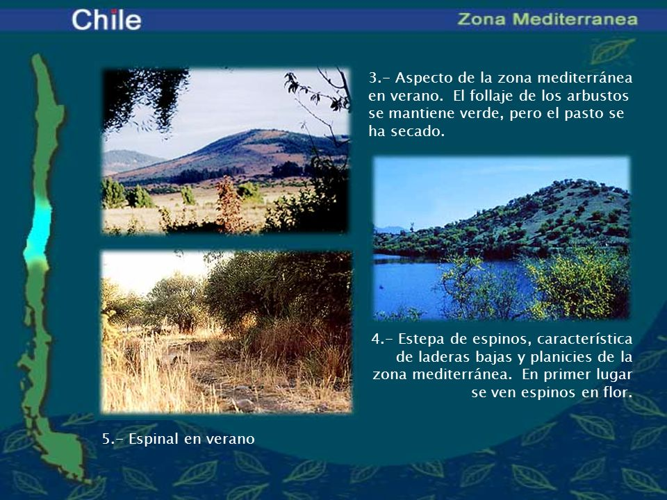 3. - Aspecto de la zona mediterránea en verano
