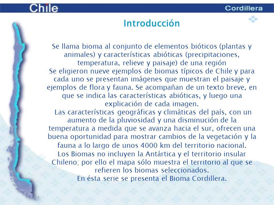 En ésta serie se presenta el Bioma Cordillera.