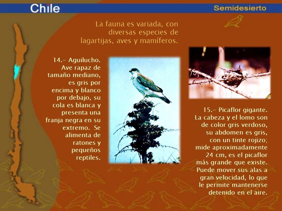 La fauna es variada, con diversas especies de lagartijas, aves y mamíferos.