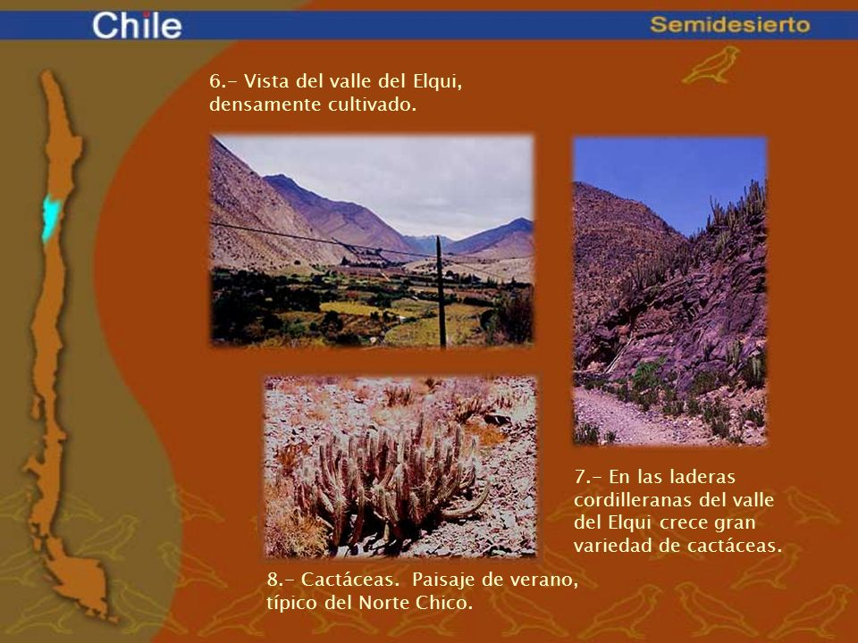 6.- Vista del valle del Elqui, densamente cultivado.