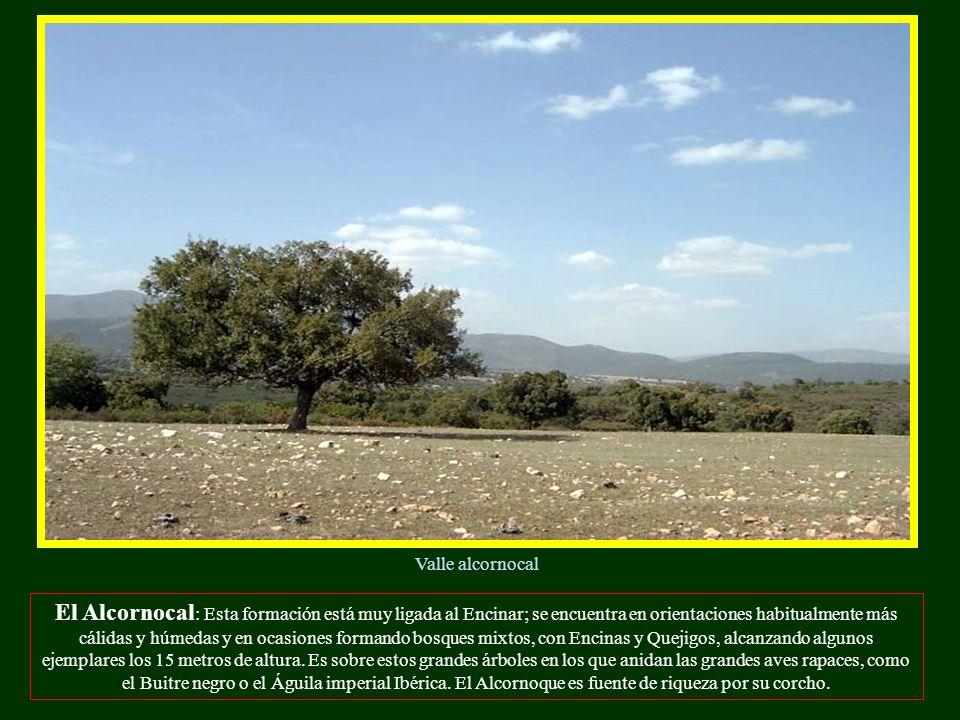 Valle alcornocal