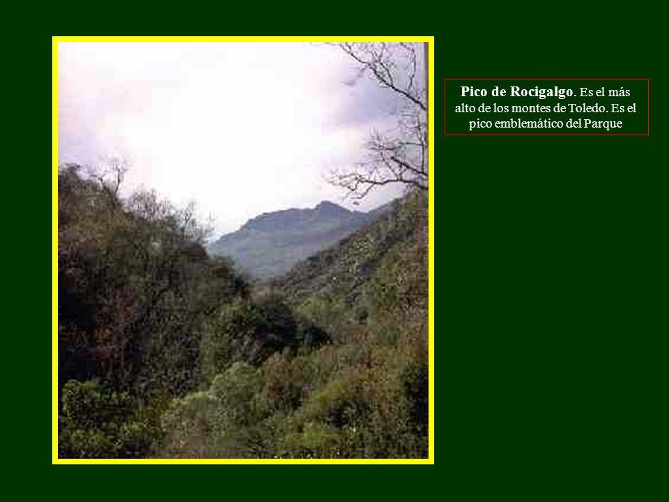 Pico de Rocigalgo. Es el más alto de los montes de Toledo