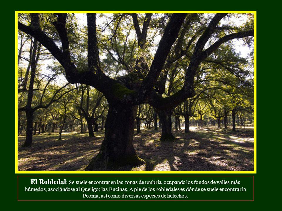 El Robledal: Se suele encontrar en las zonas de umbría, ocupando los fondos de valles más húmedos, asociándose al Quejigo; las Encinas.