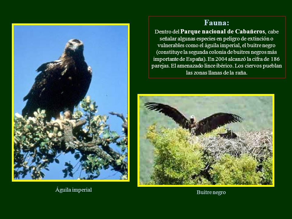 Fauna: