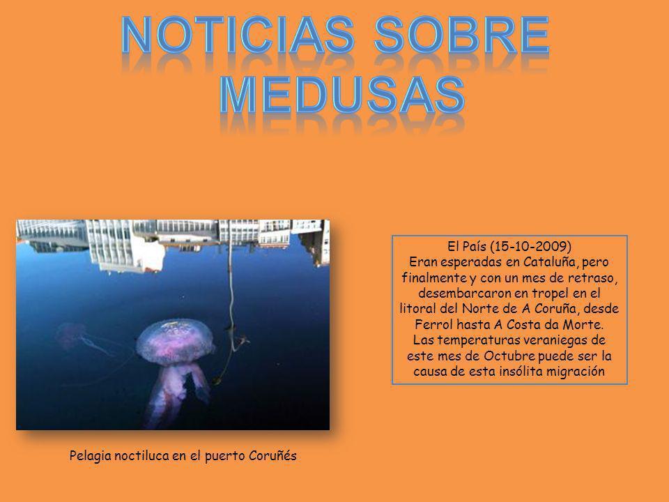 Noticias sobre Medusas