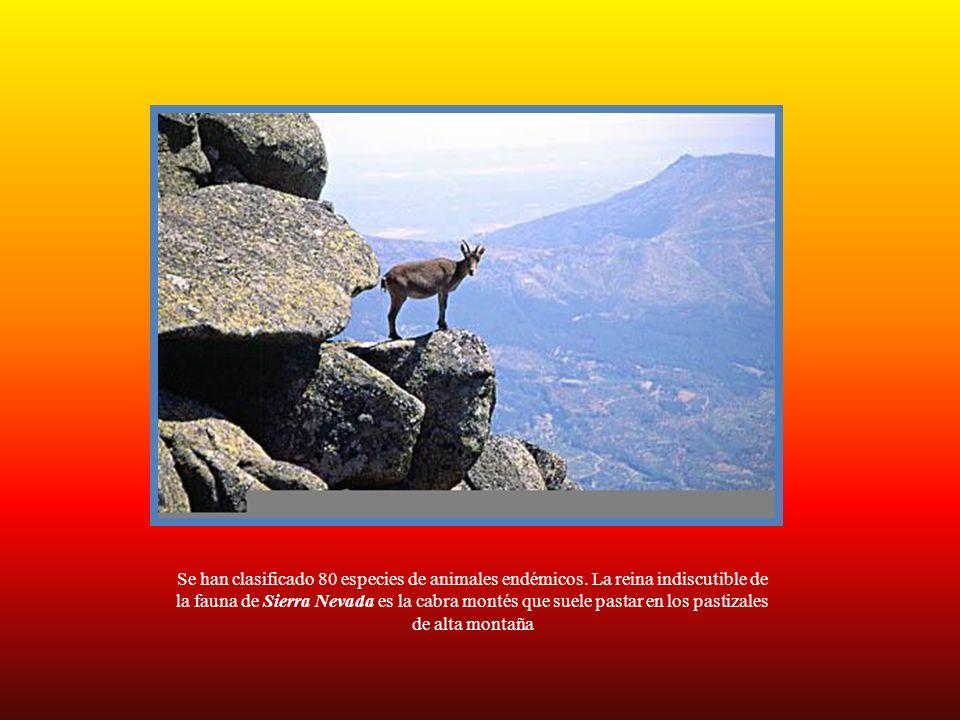 Se han clasificado 80 especies de animales endémicos