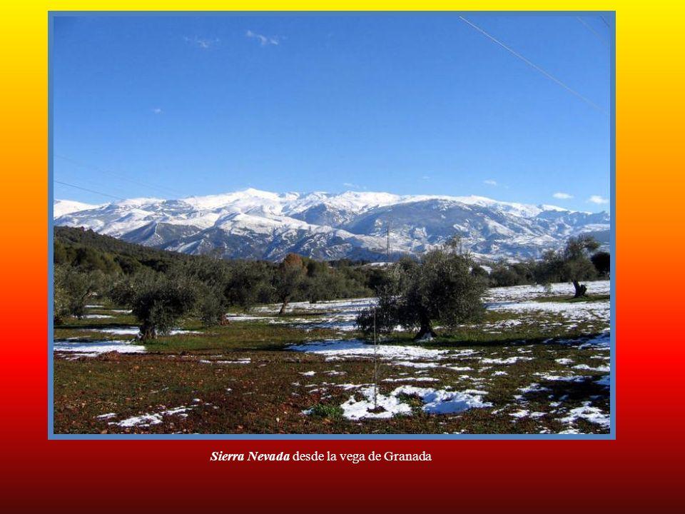 Sierra Nevada desde la vega de Granada