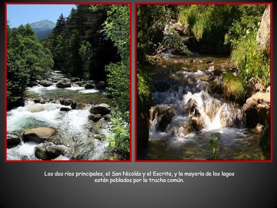 Los dos ríos principales, el San Nicolás y el Escrita, y la mayoría de los lagos están poblados por la trucha común.