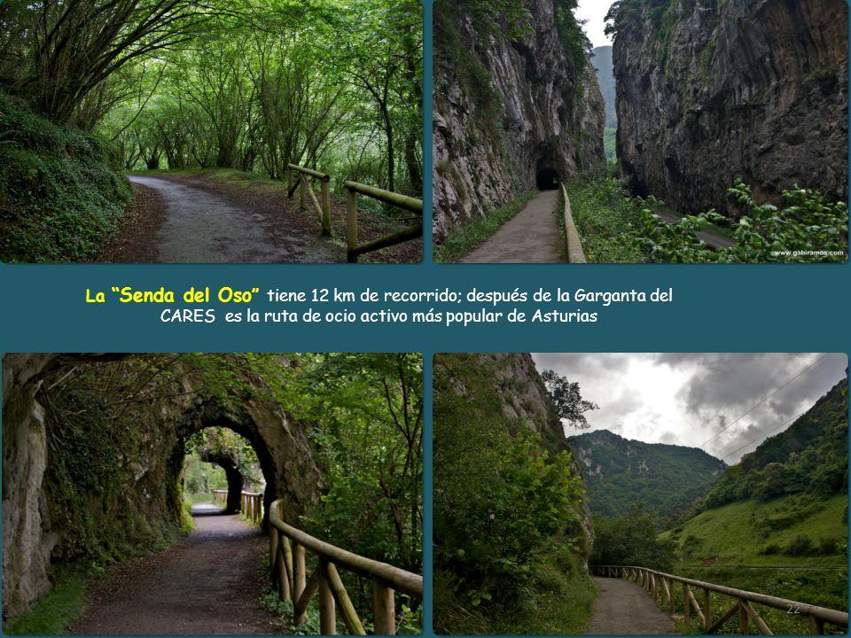 La Senda del Oso tiene 12 km de recorrido; después de la Garganta del CARES es la ruta de ocio activo más popular de Asturias