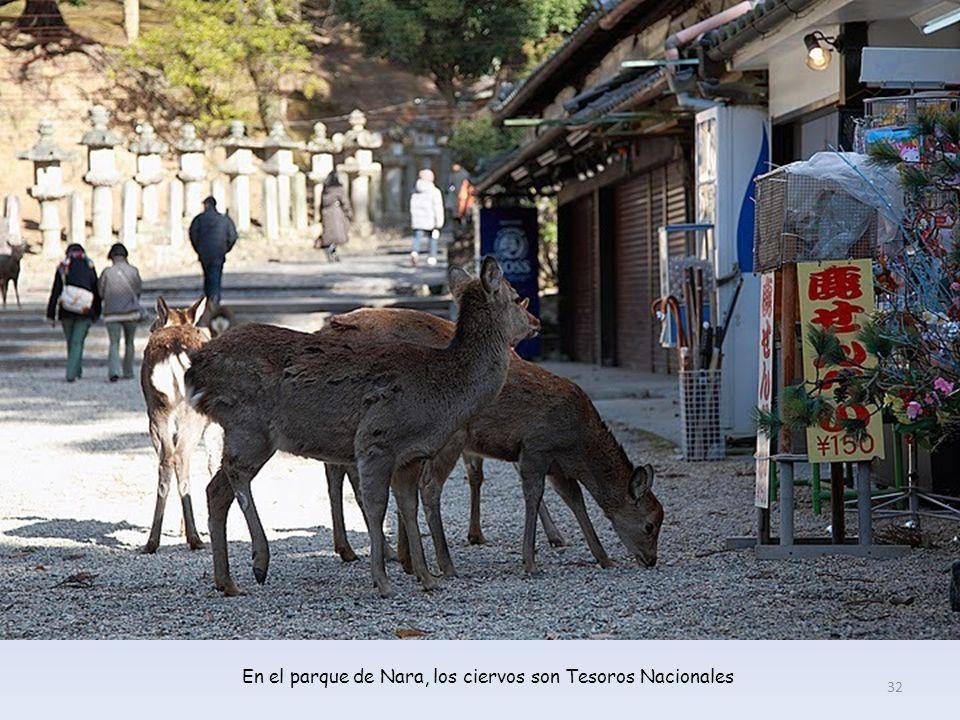 En el parque de Nara, los ciervos son Tesoros Nacionales