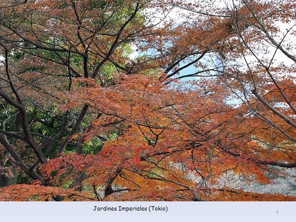 Jardines Imperiales (Tokio)