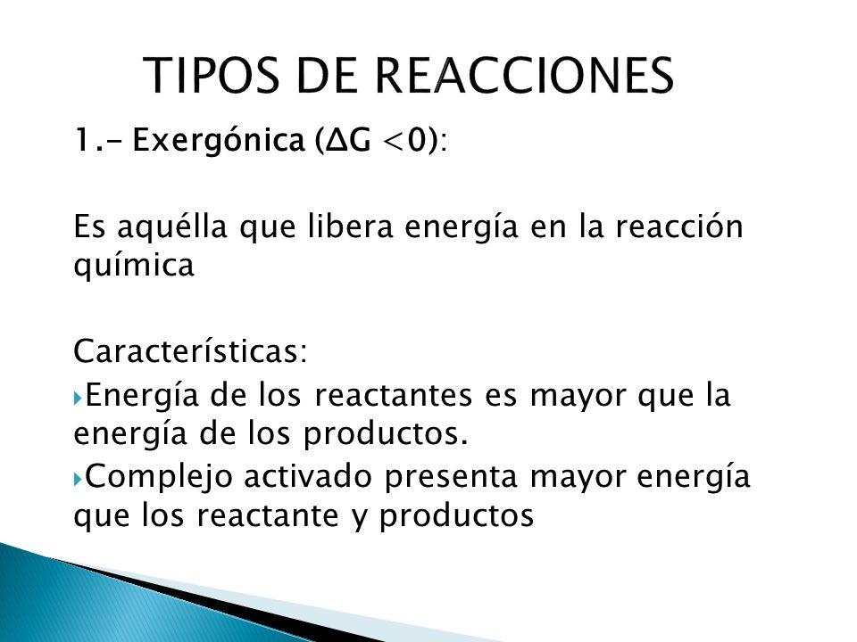 TIPOS DE REACCIONES 1.- Exergónica (ΔG <0):