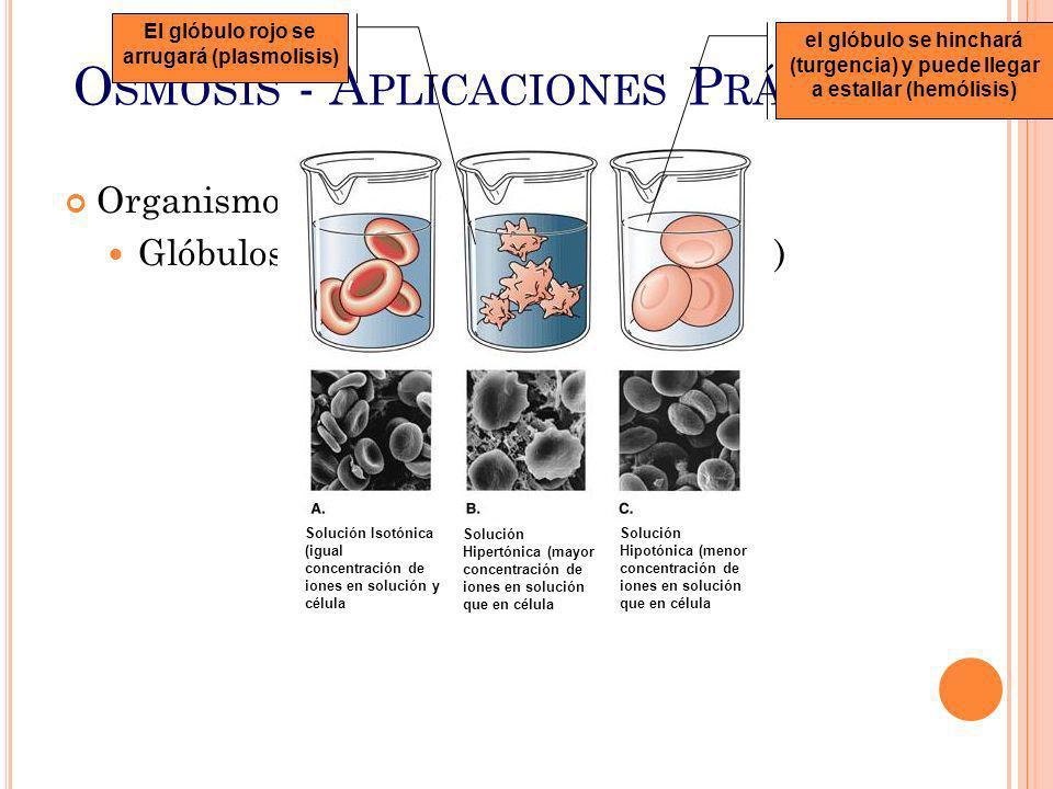 Osmosis - Aplicaciones Prácticas