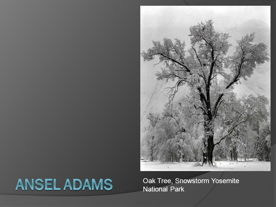 Ansel Adams Oak Tree, Snowstorm Yosemite National Park