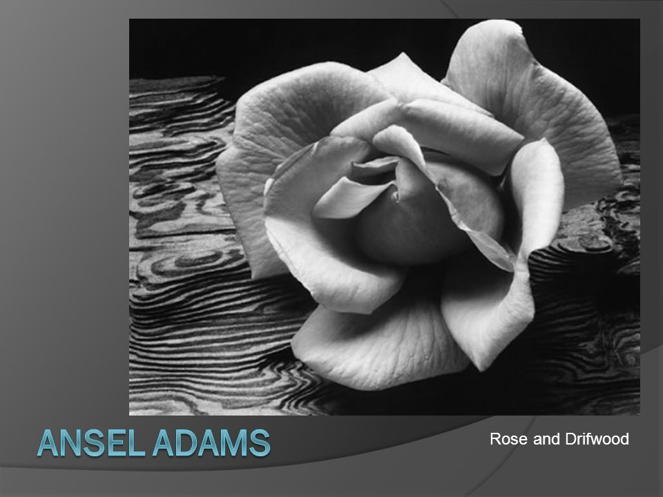 Ansel Adams Rose and Drifwood