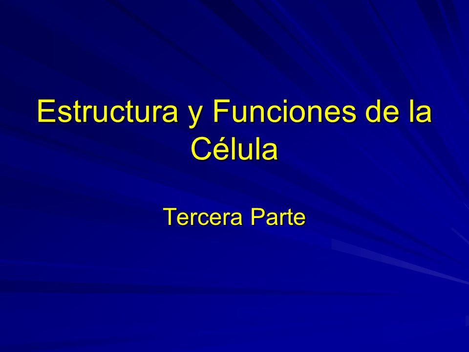 Estructura y Funciones de la Célula