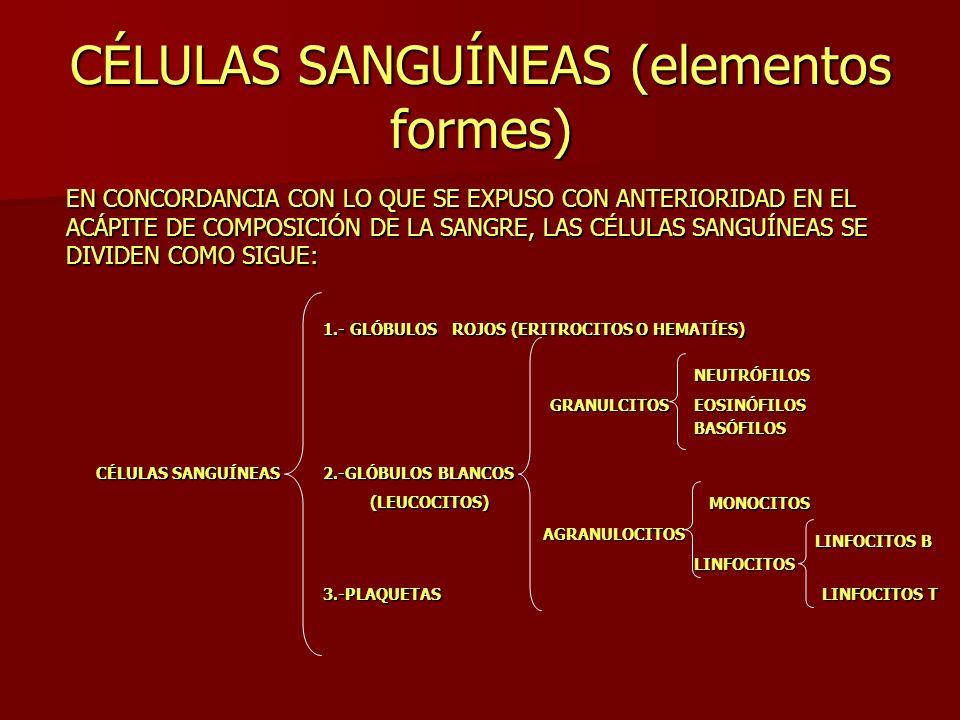 CÉLULAS SANGUÍNEAS (elementos formes)