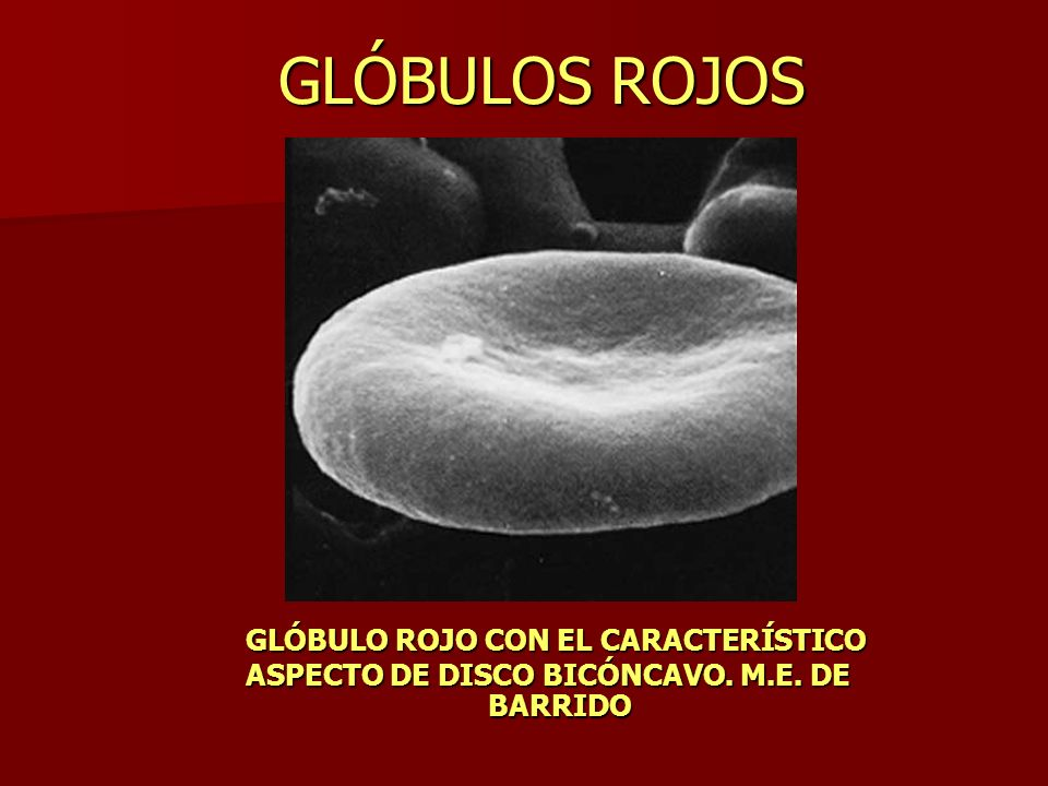 GLÓBULOS ROJOS GLÓBULO ROJO CON EL CARACTERÍSTICO ASPECTO DE DISCO BICÓNCAVO. M.E. DE BARRIDO