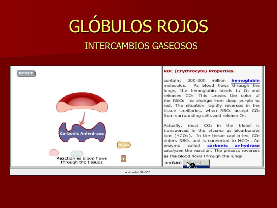 GLÓBULOS ROJOS INTERCAMBIOS GASEOSOS