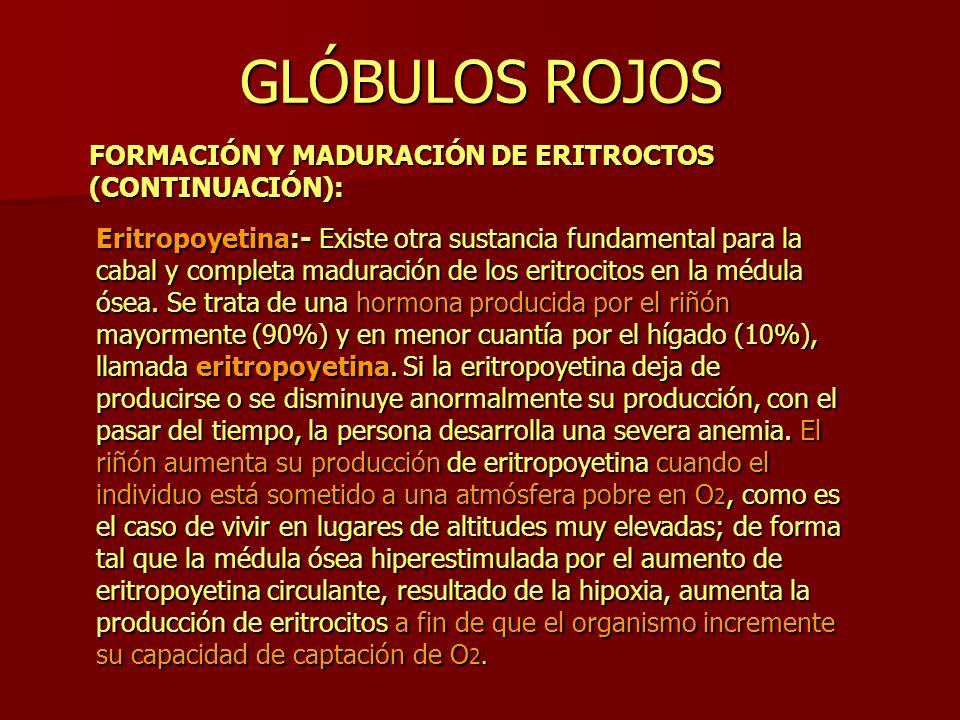 GLÓBULOS ROJOS FORMACIÓN Y MADURACIÓN DE ERITROCTOS (CONTINUACIÓN):