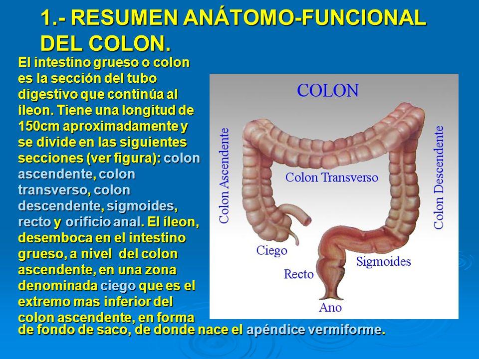 1.- RESUMEN ANÁTOMO-FUNCIONAL DEL COLON.