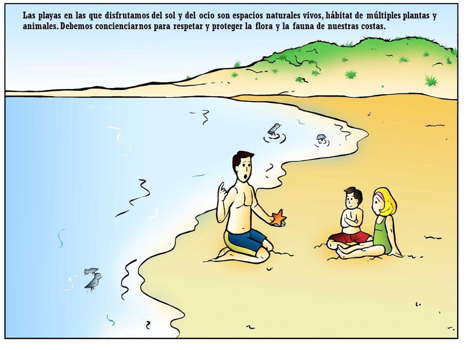 Las playas en las que disfrutamos del sol y del ocio son espacios naturales vivos, hábitat de múltiples plantas y animales.