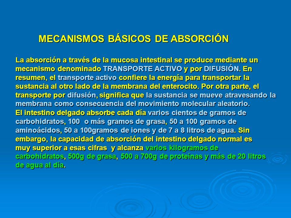 MECANISMOS BÁSICOS DE ABSORCIÓN