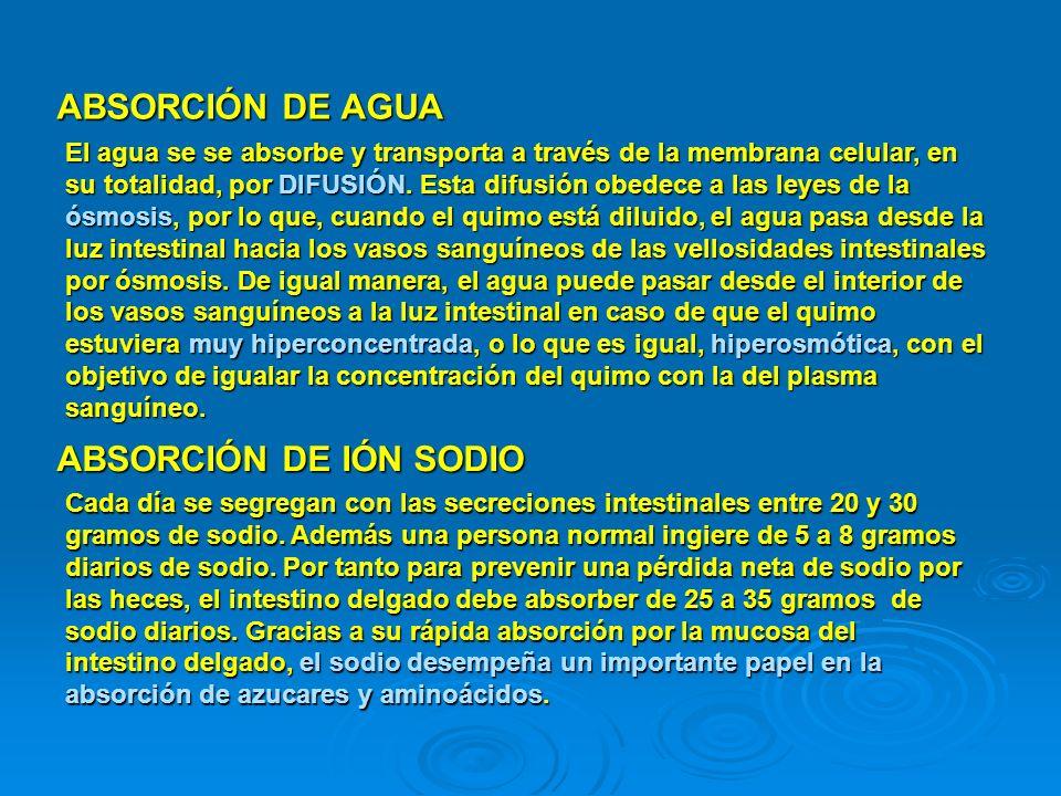 ABSORCIÓN DE AGUA ABSORCIÓN DE IÓN SODIO