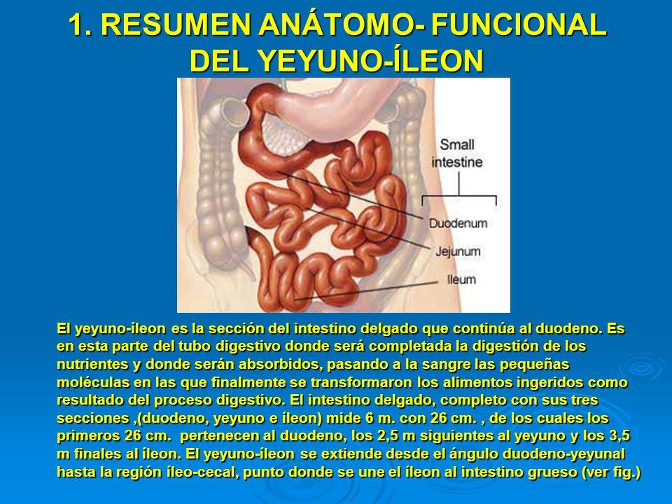 1. RESUMEN ANÁTOMO- FUNCIONAL DEL YEYUNO-ÍLEON