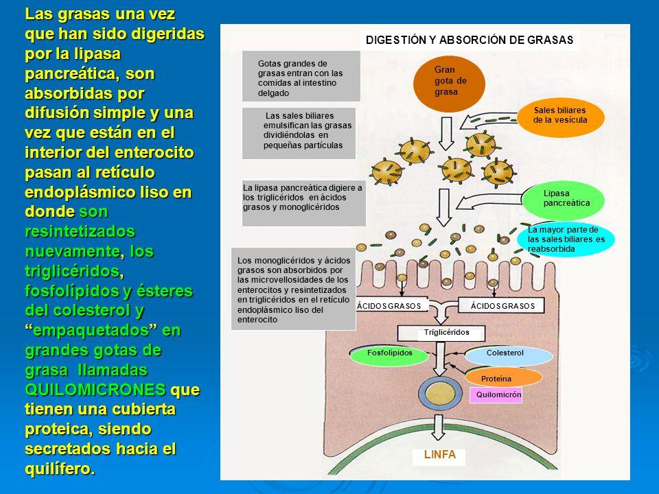 DIGESTIÓN Y ABSORCIÓN DE GRASAS