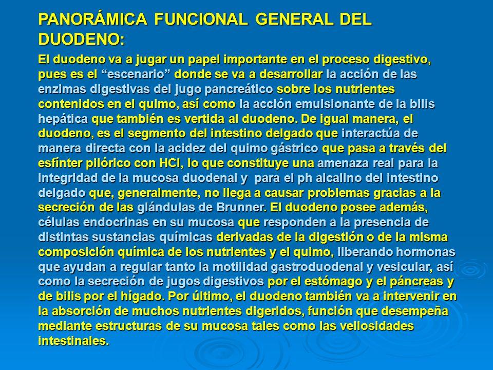 PANORÁMICA FUNCIONAL GENERAL DEL DUODENO:
