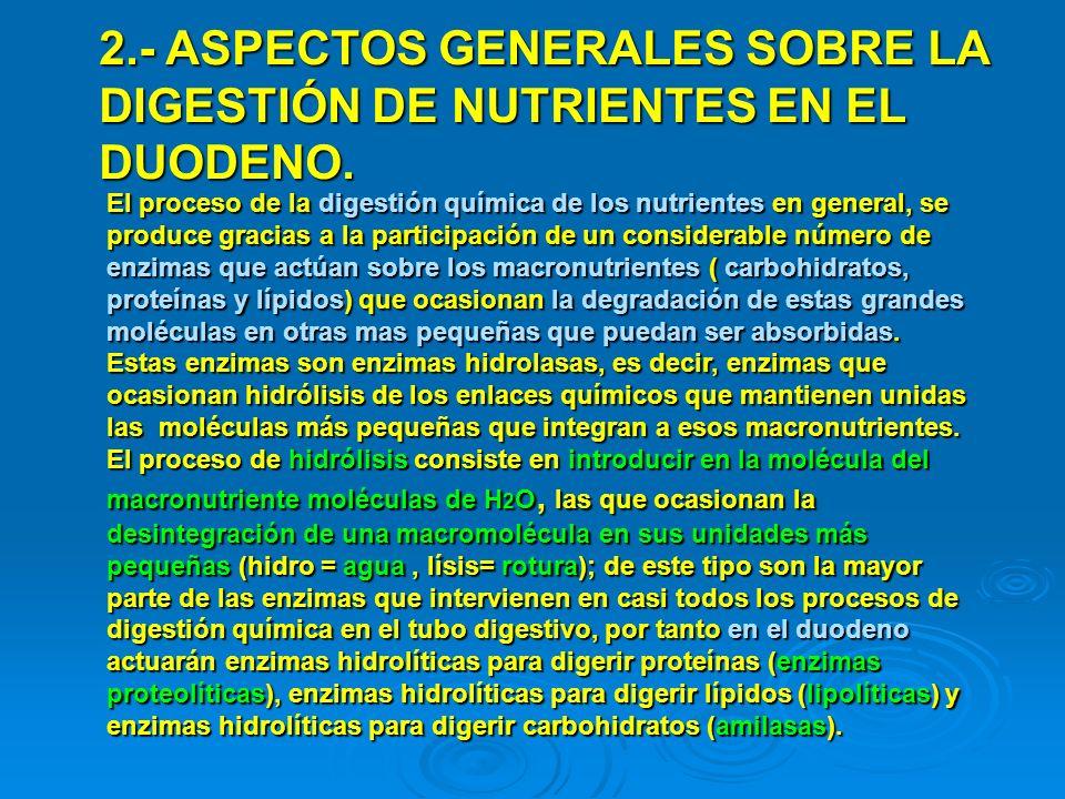 2.- ASPECTOS GENERALES SOBRE LA DIGESTIÓN DE NUTRIENTES EN EL DUODENO.