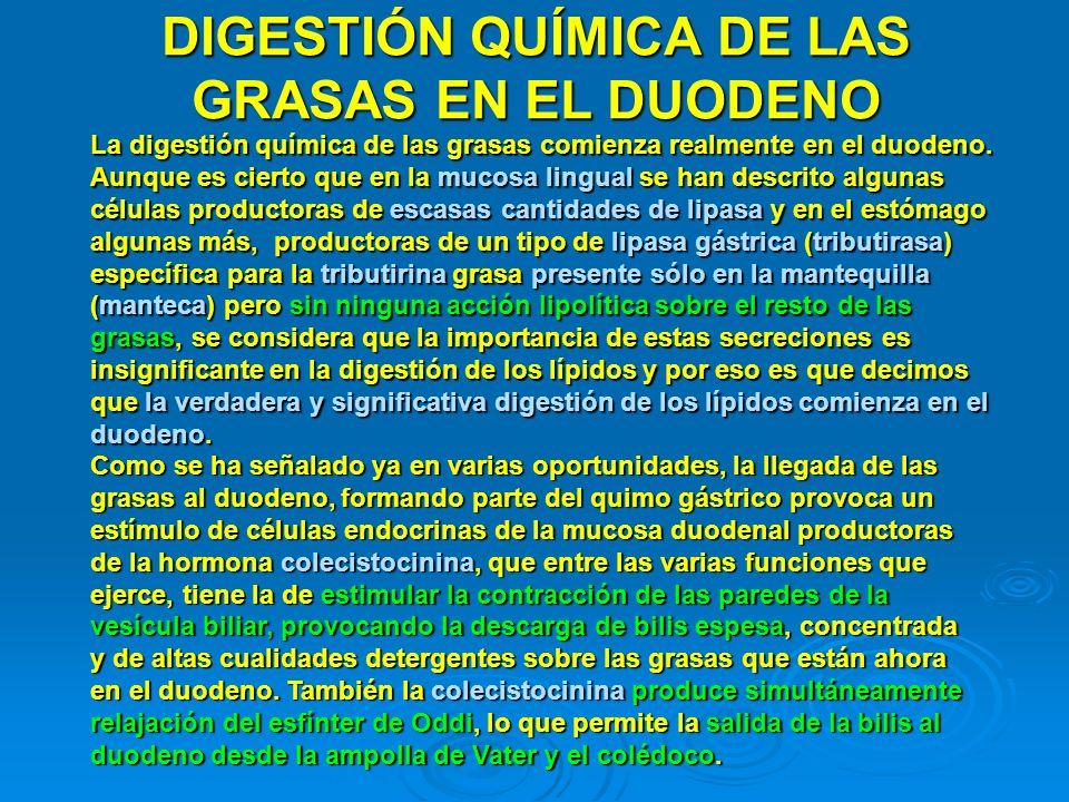 DIGESTIÓN QUÍMICA DE LAS GRASAS EN EL DUODENO
