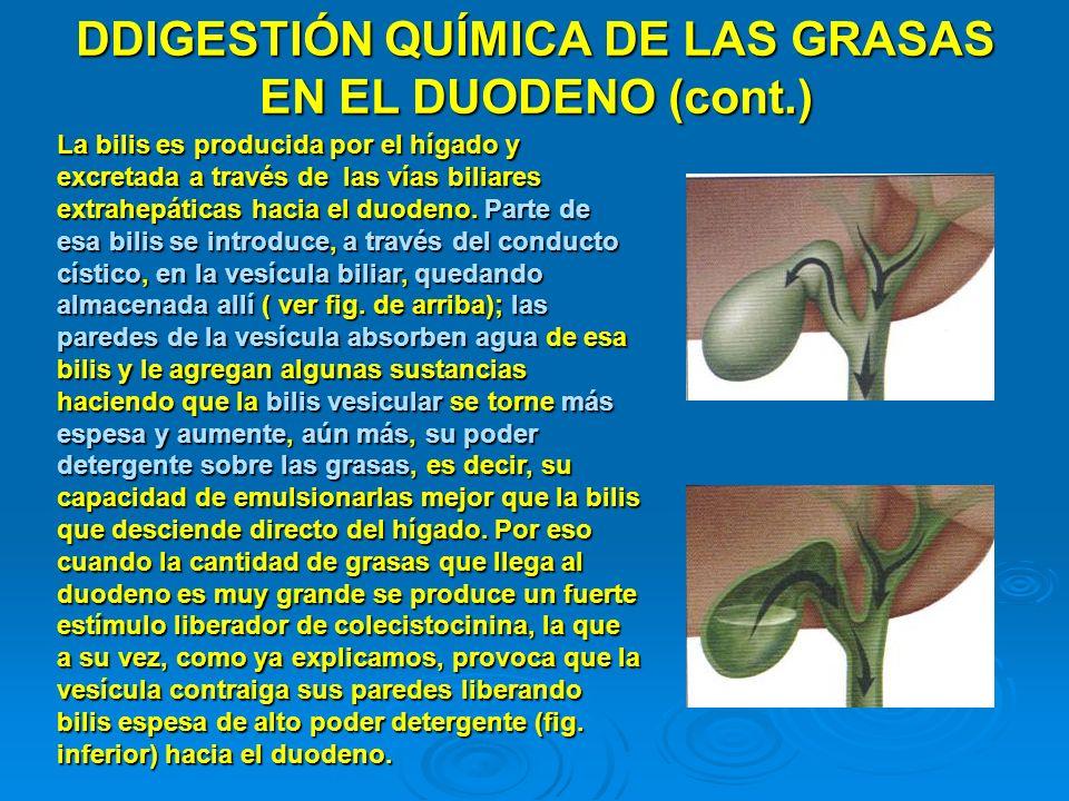 DDIGESTIÓN QUÍMICA DE LAS GRASAS EN EL DUODENO (cont.)