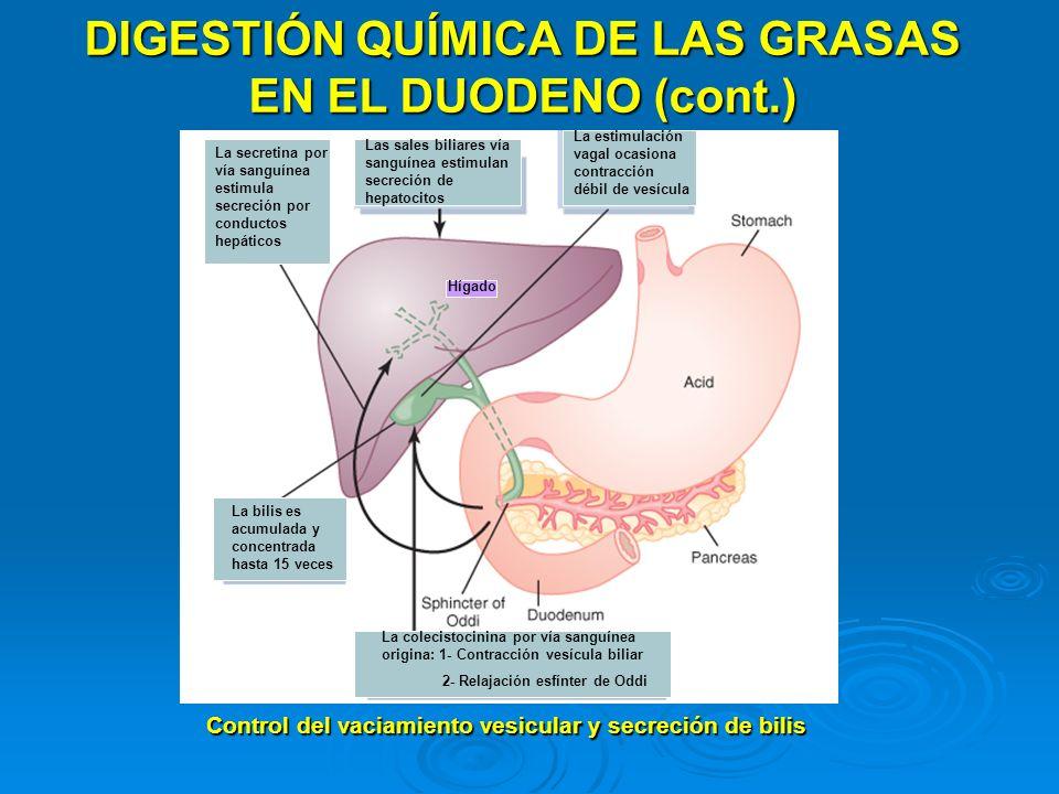 DIGESTIÓN QUÍMICA DE LAS GRASAS EN EL DUODENO (cont.)