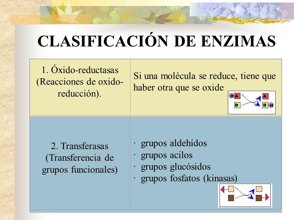 CLASIFICACIÓN DE ENZIMAS
