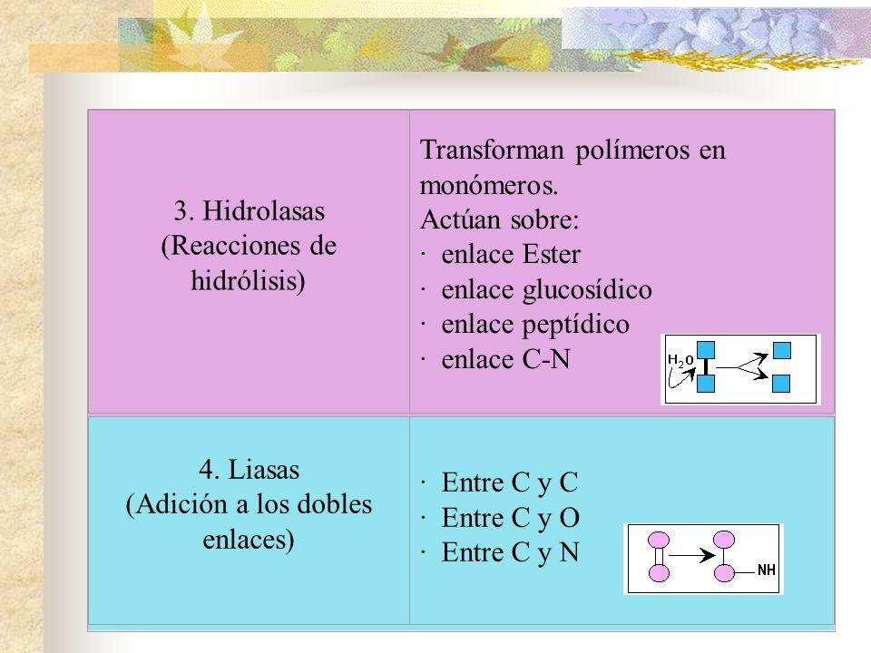 3. Hidrolasas (Reacciones de hidrólisis) · enlace Ester