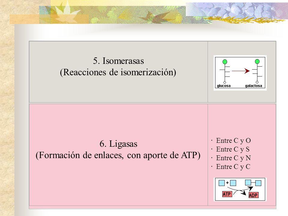 5. Isomerasas (Reacciones de isomerización)