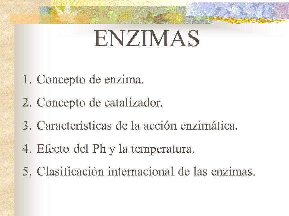 ENZIMAS Concepto de enzima. Concepto de catalizador.