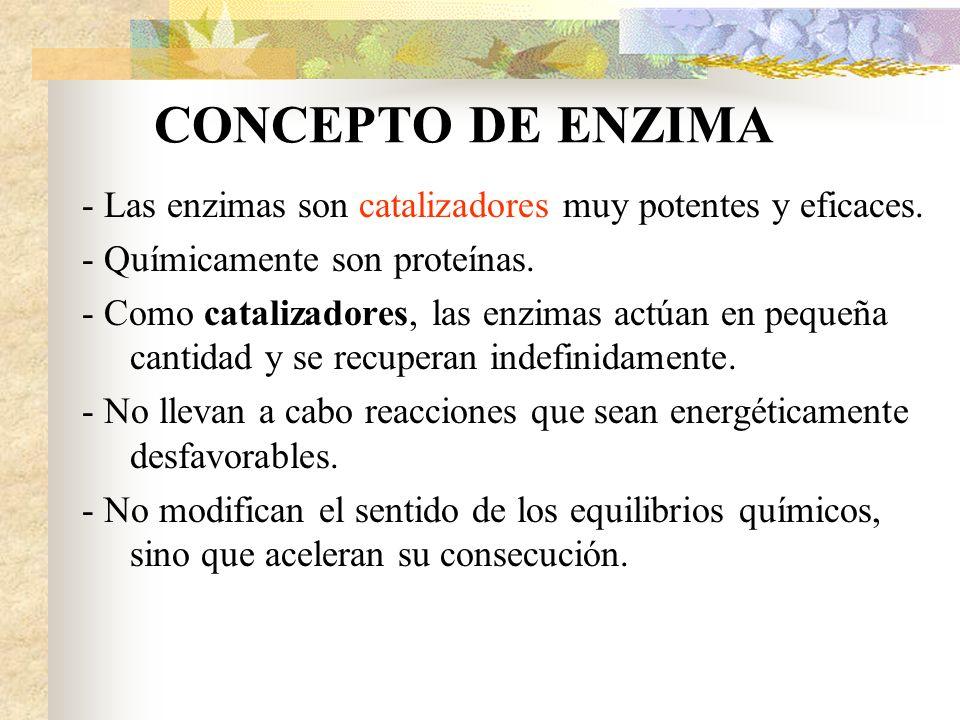 - Las enzimas son catalizadores muy potentes y eficaces.