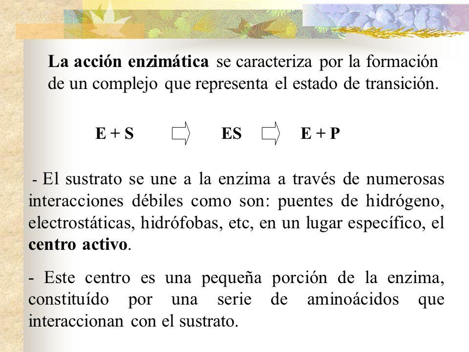 La acción enzimática se caracteriza por la formación de un complejo que representa el estado de transición.