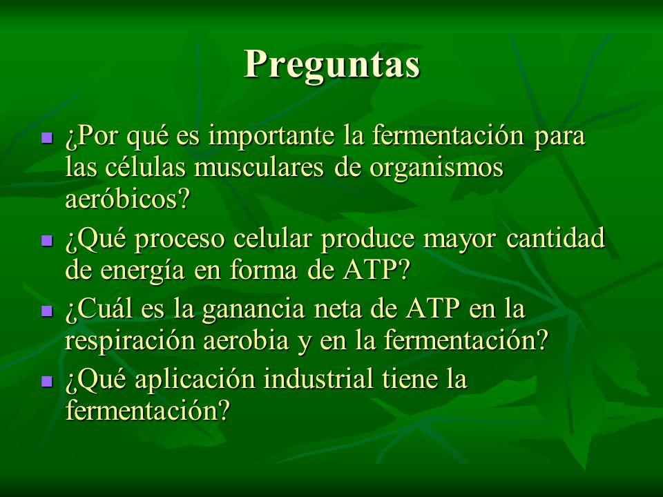 Preguntas ¿Por qué es importante la fermentación para las células musculares de organismos aeróbicos