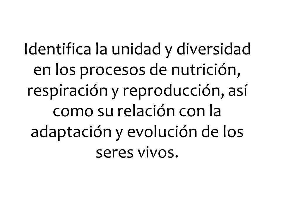 Identifica la unidad y diversidad en los procesos de nutrición, respiración y reproducción, así como su relación con la adaptación y evolución de los seres vivos.