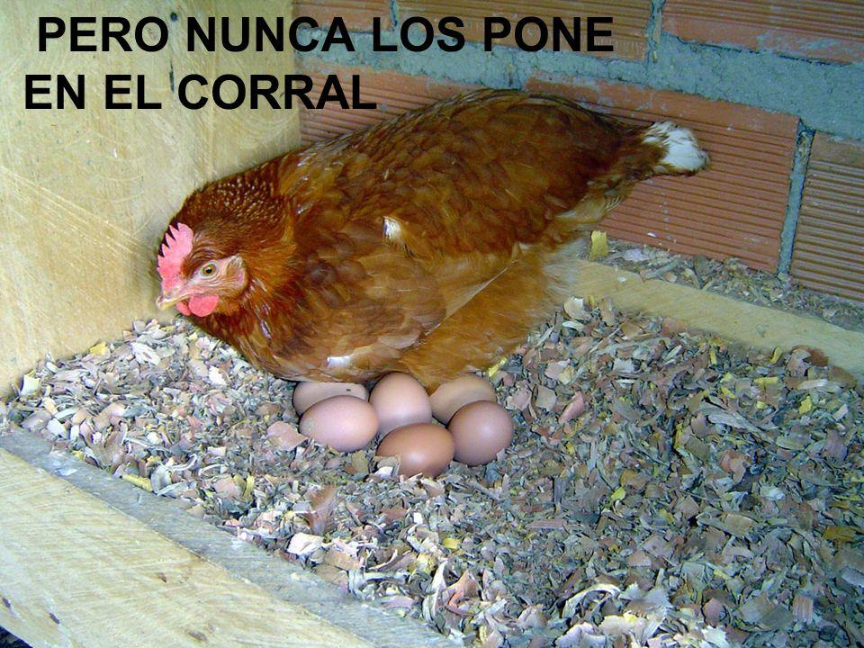 PERO NUNCA LOS PONE EN EL CORRAL