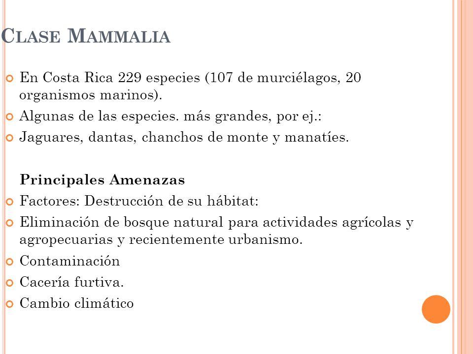 Clase Mammalia En Costa Rica 229 especies (107 de murciélagos, 20 organismos marinos). Algunas de las especies. más grandes, por ej.: