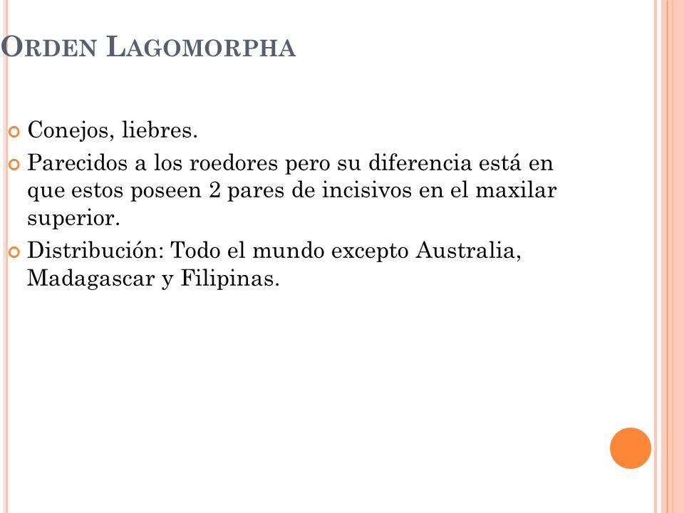 Orden Lagomorpha Conejos, liebres.