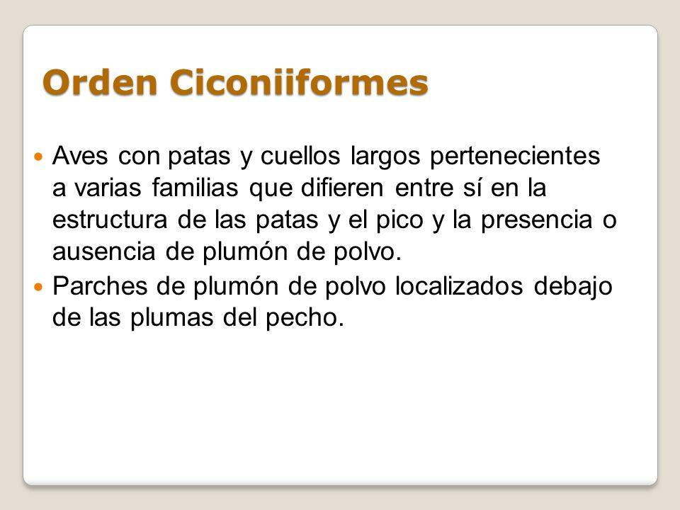 Orden Ciconiiformes