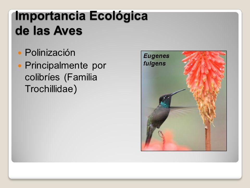 Importancia Ecológica de las Aves