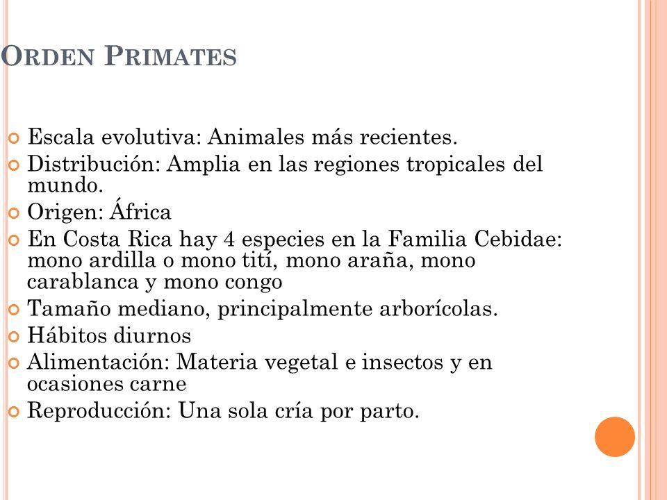 Orden Primates Escala evolutiva: Animales más recientes.
